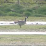 Canada Goose Balormie 25 Apr 2015 Bob Proctor