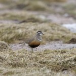 Dotterel Cairn Lochan 9 June 2013 Richard Somers Cocks