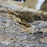 Knot Burghead 24 Apr 2014 Gordon Biggs