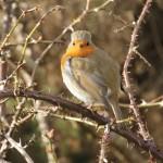 Robin, Findhorn 4 Mar 2015 (Martin Cook) P