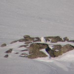 Snowy Owl Ben Macdui 27 Feb 2013 Jacob Davies copy