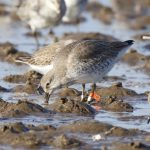 Knot 1M Findhorn Bay 22 Feb 2018 Richard Somers Cocks