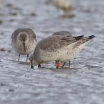 Knot 8X Findhorn Bay 18 Jan 2018 Richard Somers Cocks