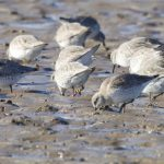 Knot N6RRYY Findhorn Bay 23 Feb 2018 Richard Somers Cocks