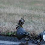 Merlin Lossiemouth airfield 14 September 2018 Allan Lawrence 1