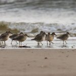 Knot Findhorn 14 Aug 2019 Richard Somers Cocks