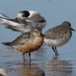 Knot Findhorn beach 8 Sept 2019 Richard Somers Cocks 2
