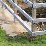Kingfisher Elgin 12 Apr 2017 Moray Mackay