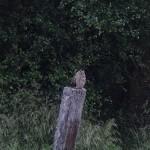 Long eared Owl Grange 11 Jul 2015 Valerie Sheach Leith 1